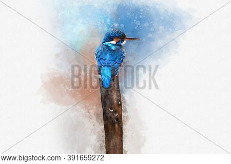 Common Eurasian Kingfisher Perches On A Small Fence. Watercolor Digital Painting, Vintage Effect. Bi