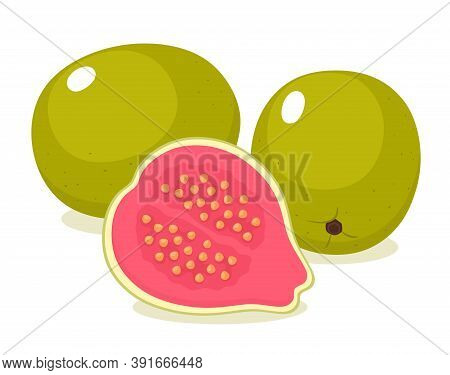 Tropical Guava Fruit, Whole And Half Cut. Vector Illustration.