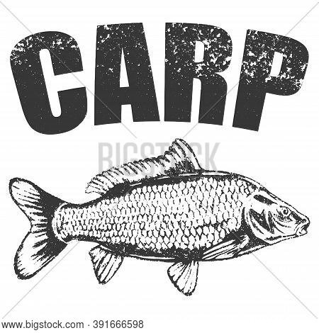 Vector Hand Drawn Carp Sketch. Sea Food Fish Drawing Illustration. Engraved Isolated On White Backgr