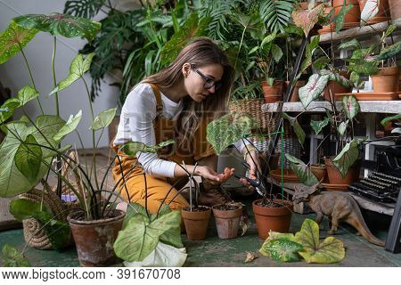 Focused Woman Gardener In Glasses Wear Overalls Sitting, Pruning Dry Withered Caladium Houseplant, T