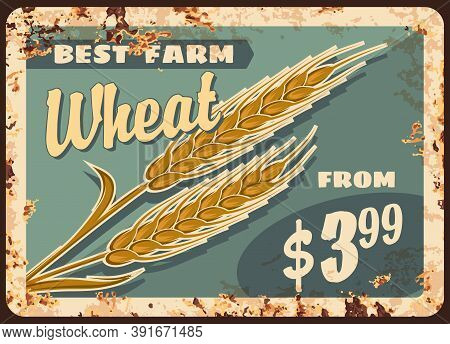 Wheat Rusty Metal Plate, Vector Promo For Agricultural Farm Production. Farm Grain Harvest Vintage R