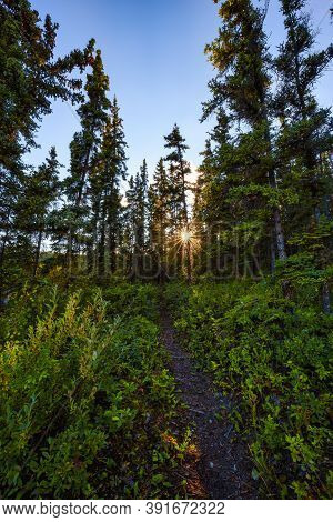 Beautiful Hiking Trail In The Woods And Canadian Nature During A Sunny Sunset. Near Whitehorse, Yuko
