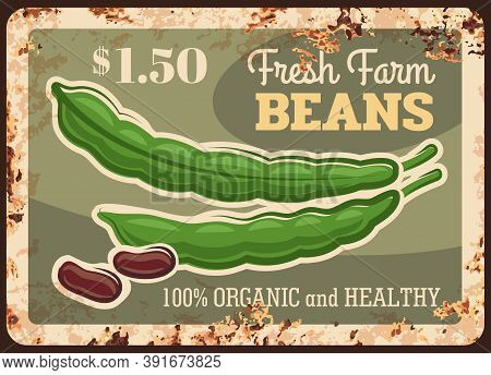 Beans Rusty Metal Plate, Vegetables Farm Market Food, Vector Vintage Price Poster. Natural Organic L