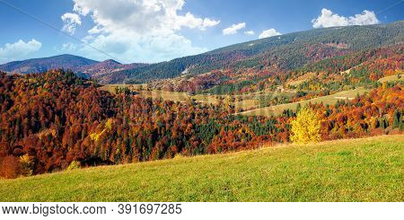 Countryside Scenery In Fall Season. Trees On Grassy Mountain Hills In Fall Colors. Beautiful Sunny W