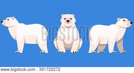 Polar Bear In Different Angles. Arctic Animal In Cartoon Style.
