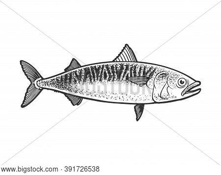 Atlantic Mackerel Scomber Fish Sketch Engraving Vector Illustration. T-shirt Apparel Print Design. S