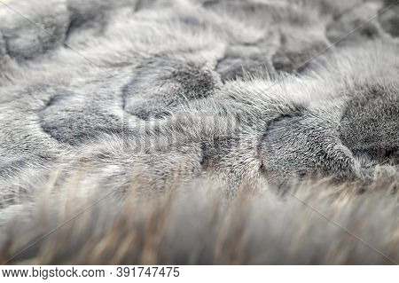 Close-up And Selective Focus Of Grey Mink Fur Pattern And Blurred Silver Fox Fur In The Foreground.