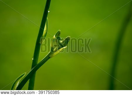A Green Plant Stem Against A Defocused Green Background Points To Nature, Peacefulness, Tranquility,