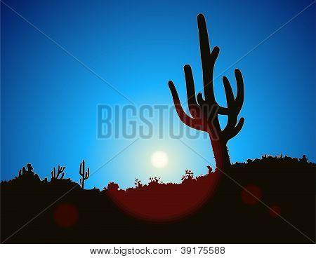 Blue Sky Cactus