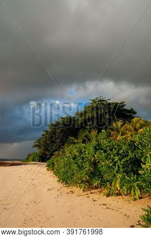 Green Vegetation On The Tropical Beach (autograph Tree, Clusia Rosea)