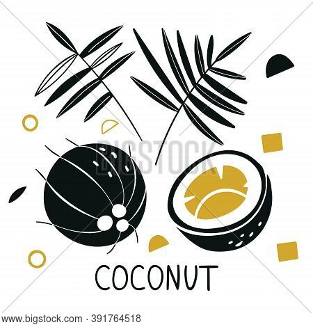 Silhouettes Of Coconut. Vector Coconut Hand Drawn Sketch With Palm Leaf. Sketch Vector Tropical Food