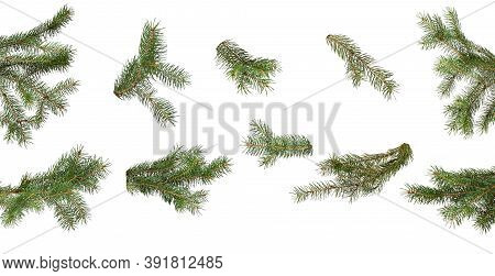 Set Of Green Christmas Fir Branch Isolated On White Background, Close-up