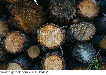 Preparation Of Firewood For The Winter. Firewood Background, Stacks Of Firewood In The Forest. A Pil