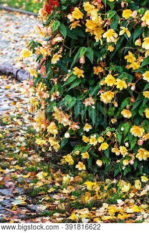 beautiful ornamental plant in the backyard