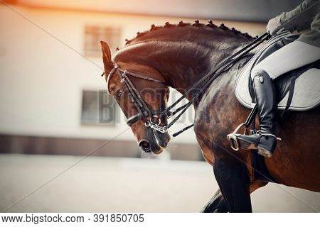 Equestrian Sport. Portrait Sports Stallion In The Double Bridle. The Leg Of The Rider In The Stirrup