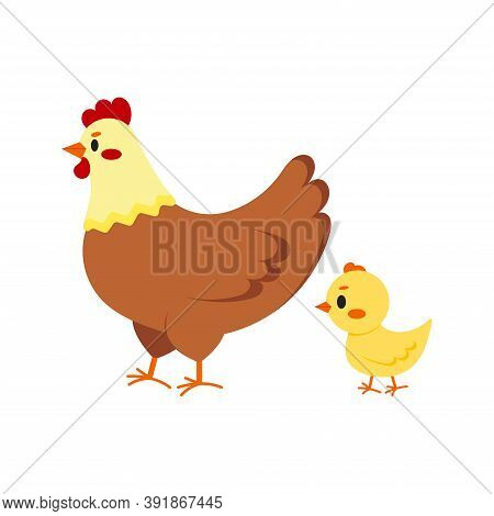 Hen And Chick Icon Set Isolated On White Background. Cute Farm Birds Family Flat Design Cartoon Styl
