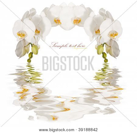 The frame of the beautiful white orchids isolated on a white background poster