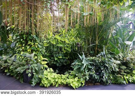 Variety Of Tropical Green Plants And Trees By A Pond