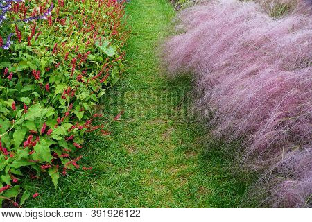 A Beautiful Path In A Garden Decorated With Pink Muhly Grass And Tiny Red Flowers