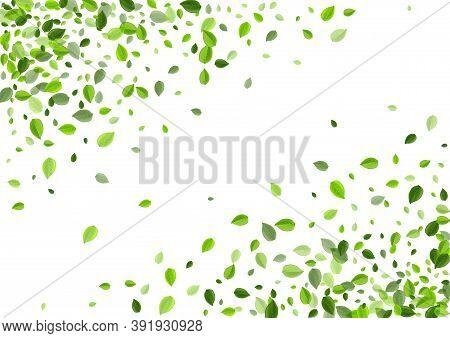 Grassy Leaves Herbal Vector Concept. Fly Greens Wallpaper. Swamp Leaf Tea Illustration. Foliage Wind