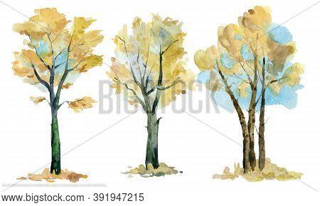 Three Beautiful Trees In Autumn Foliage. Watercolor