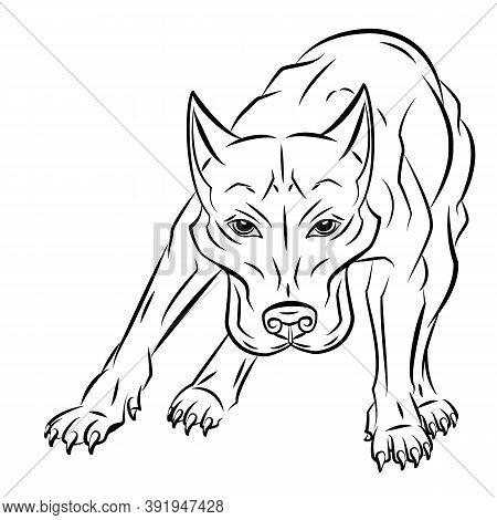 Simple Vector Image Of An American Pit Bull Terrier. Isolated Vector Illustrations In Black On A Whi