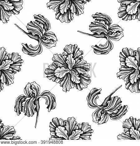 Seamless Pattern With Black And White Iris Stock Illustration