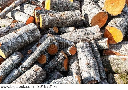 Stock Pile Of Timber, Chopped Down Trees. Chopped And Stacked Up Firewood