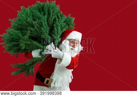 Santa Man Carrying Artificial Christmas Tree. Christmas, New Year, Holidays. Christmas Decor Concept