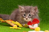 Cute gray kitten playing on artificial green grass poster