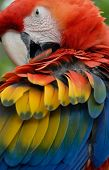 Colorful parrot looking directly into the camera lens poster