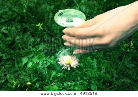 Flower Under Bowl Glass - Protect Nature Concept