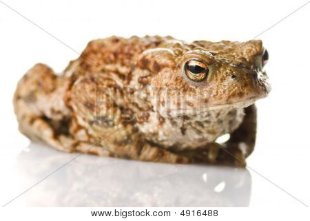 A Toad on a white reflective surface poster