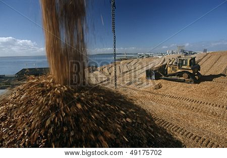 Plantation Eucalyptus (bluegum) trees being woodchipped for export