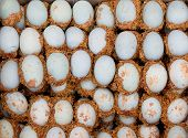 Chinese century rotten eggs special exotic food poster
