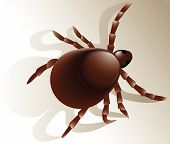 Vector Illustration of tick - dangerous insect poster