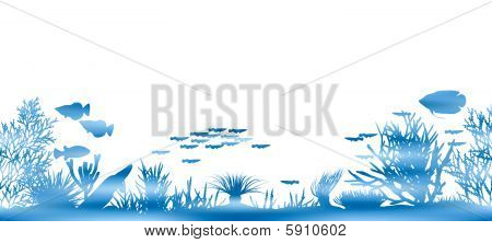 Water coral