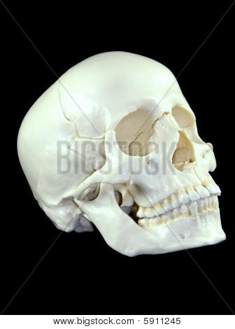 Human Skull for Medical Training isolated on Black Background