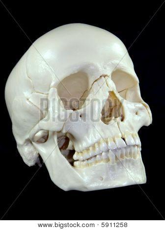 Human Skull isolated on Black Background