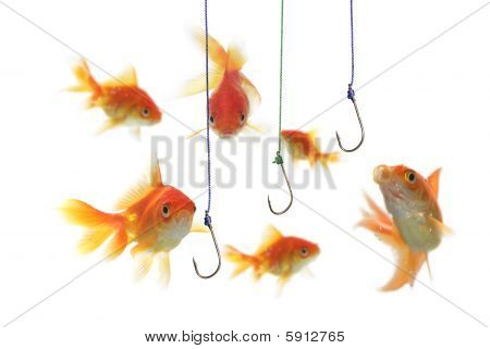 gold fish and empty hooks on white background poster