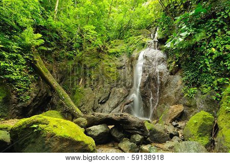 Wild Colombian Darien Jungle