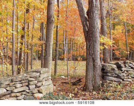 Connecticut Forest