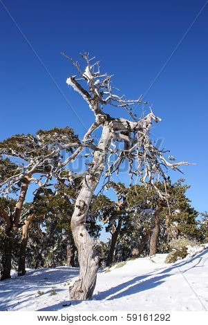 snowy tree in navacerrada madrid spain Europa.