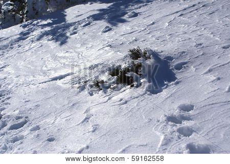 snowy tree in navacerrada madrid spain Europa,