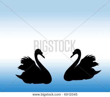 The Swan.