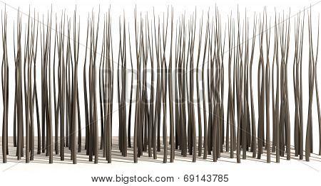 Microscopic Hair Roots