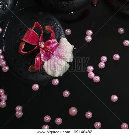 Spa Concept Of Orchid Cambria Flower And Pearl Beads, Zen Stones With Drops On Reflection Water, Clo