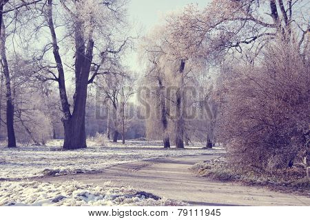 Winter Trees In The Park And A Dirt Road