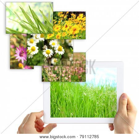 Tablet PC in hands and images of nature objects isolated on white