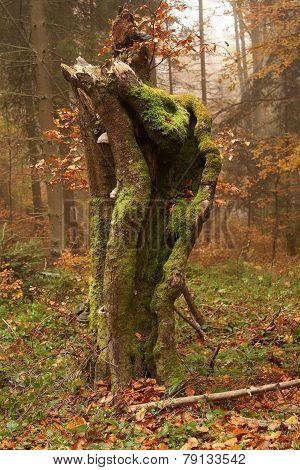 Atumn Tree Trunk